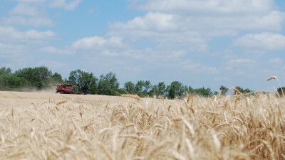 Why Christians Need to be Quick in Harvest